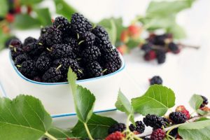 Top health benefits of mulberry