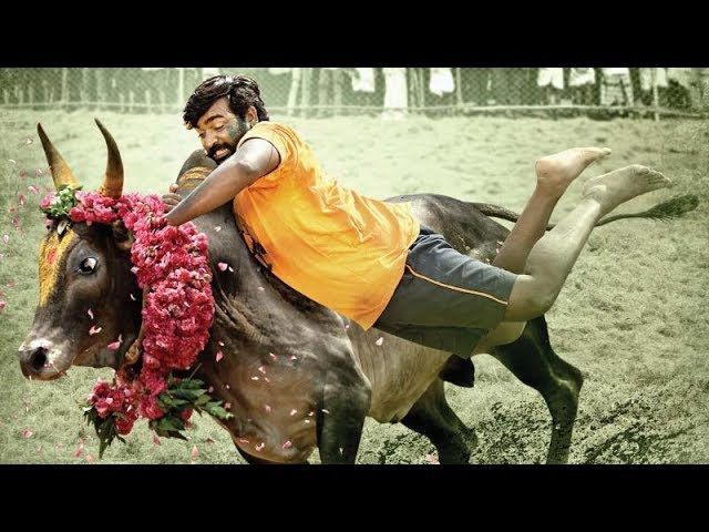 Upcoming movie Karuppan starring Vijay Sethupathi official Tamil teaser released