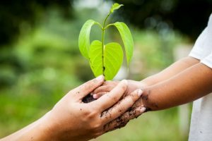 Looking towards a greener future