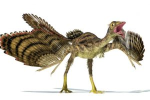 How dinosaurs became birds