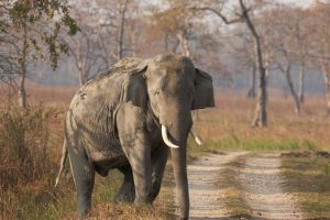 Forest officials Fail to track injured elephant hit by goods train