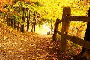 Take the autumn road