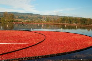 Where cranberry grows
