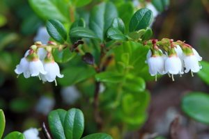Review of draft medicinal plant policy on Wednesday