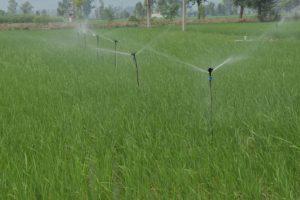 Complete irrigation project worth `10K cr soon: Rana Gurjeet Singh