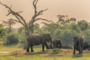 The inner elephant