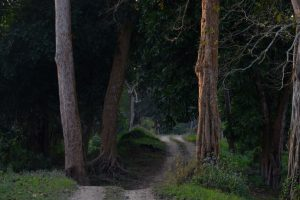 Assam forest turns into playhouse for a theatre fest