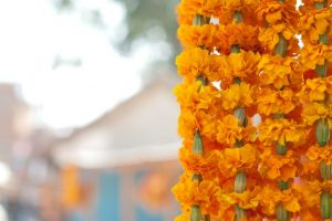 Know the medicinal values of marigold