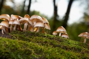 Magic mushrooms may 'reset' depressed brains