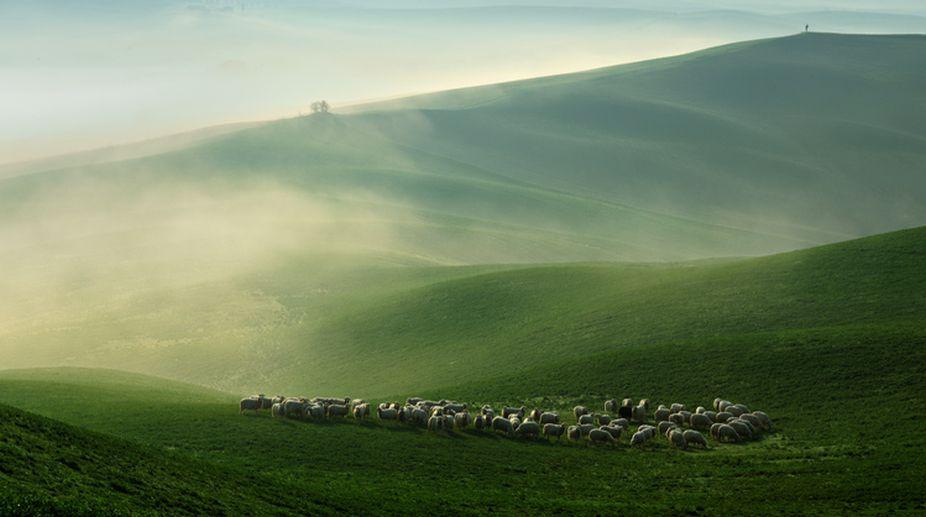 Misty Tuscany meadows