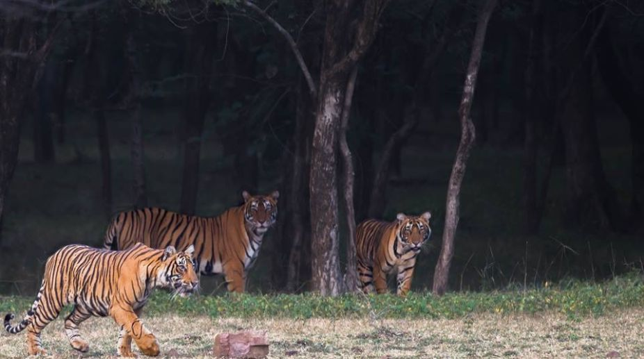 Corbett NAtional Park, Tiger, tourists, Tiger, Drone, Wildlife lovers
