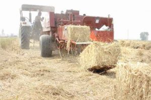 Punjab government to generate power through straw