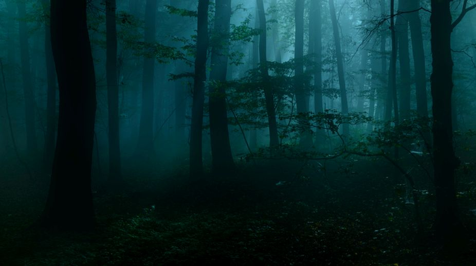 forest, hush