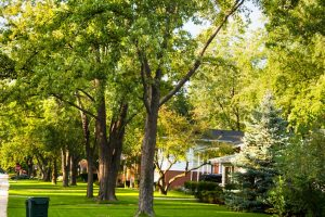 Green neighbourhood may help in reducing asthma risk