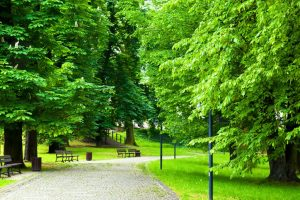 A walk to remember in green Delhi