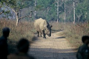 Ensuring the safety of rhinos