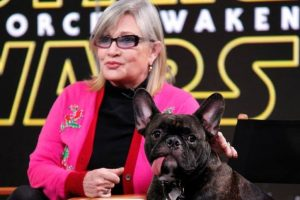 'The Last Jedi' features alien inspired by Fisher's dog