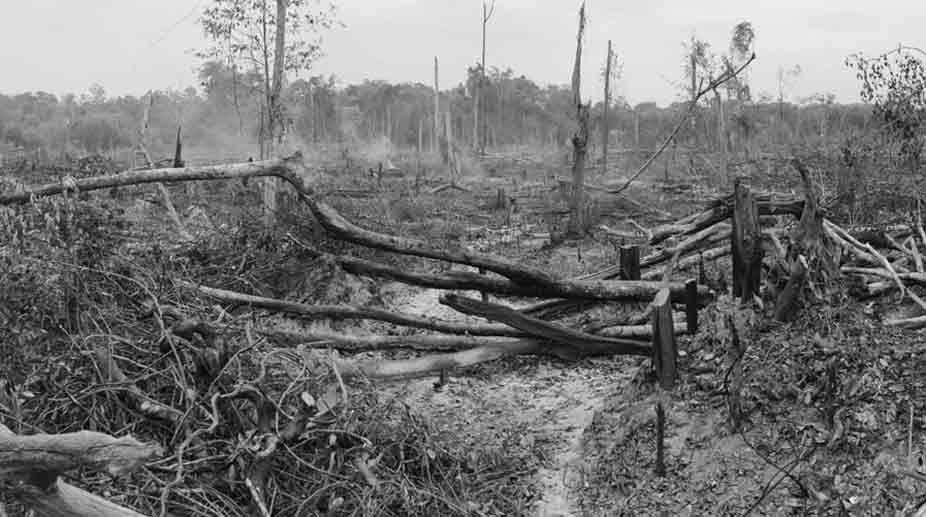 Damage-to-biodiversity