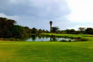 UN action set to revive Kenyan lake around which flowers bloom
