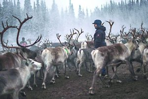 'Black Christmas' in Santa Claus land