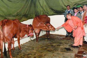 En-route to Shimla, Yogi Adityanath lands in Dehradun