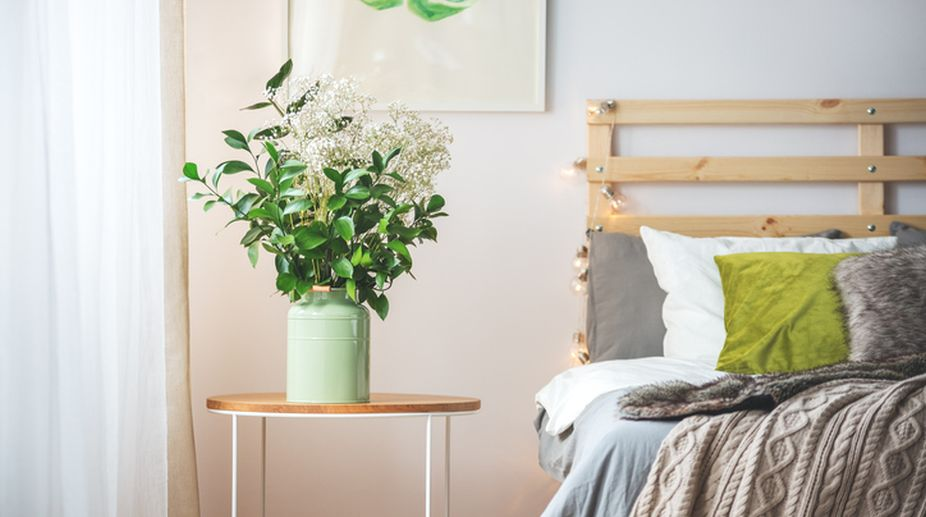 Sleep well embracing powerful plants