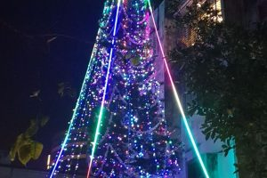 India's tallest Christmas tree reaches up to the heavens
