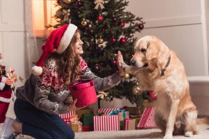 Keep chocolates away from dogs as Christmas season sets in