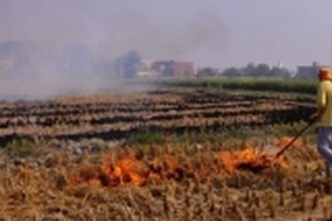 Use of smart machinery can check stubble burning, farm experts suggest