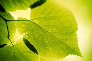 Research reveals: Photosynthesis is a 1.25 billion years old process