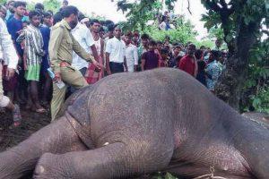 Killer elephant tranquilised, taken to jungle