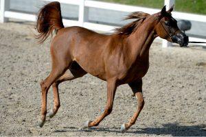 Delhi to ban entry, exit of horses