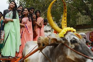 Three more gored to death by charging bulls during Pongal