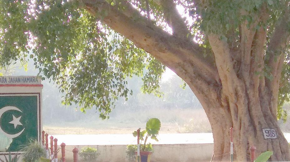 Tree as border pillar