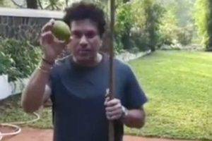 Sachin Tendulkar snaring a 'mango—limboo' is the best thing you will see today