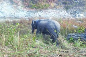 Haridwar killer elephant released in wild