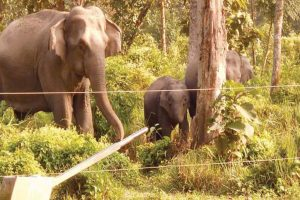 Live wires to stop animals from entering villages