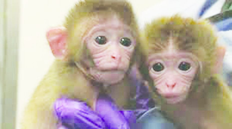 Genetically identical twin monkeys.
