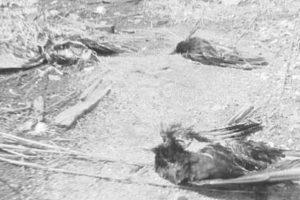 Death of crows raises row