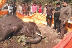 Injured elephant found by villagers, dies after a month