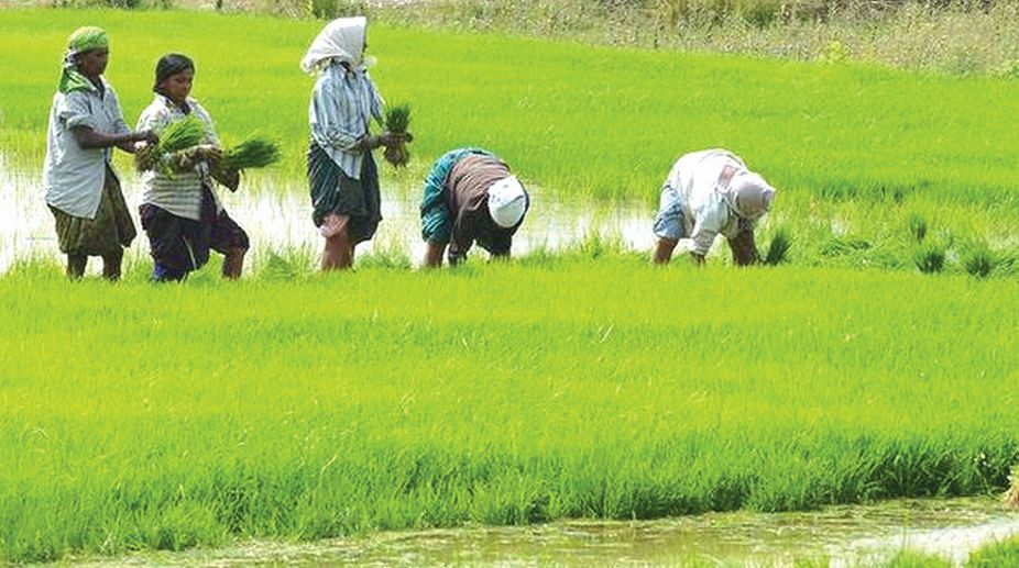 Farmland, economy, industrial development, political elites