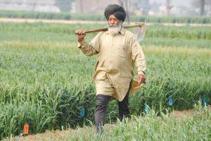 Punjab farmer unions to corner Cong govt