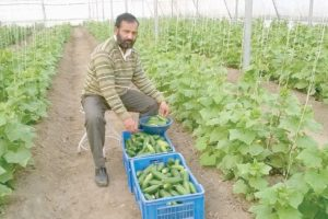 Una farmer makes it big from laboratory to land