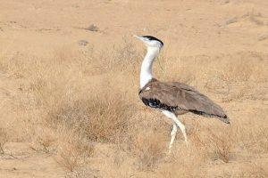 Madhya Pradesh to denotify 86 sq km of wildlife sanctuary