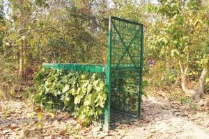 Cages set up in Madhupur forest to trap Bengal tiger