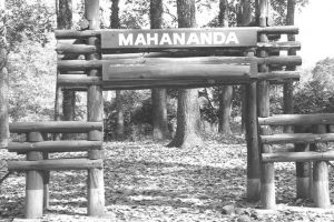 Mahananda cams capture rare animals' photos
