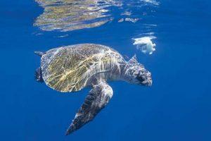 Turtles invade beach for mass nesting