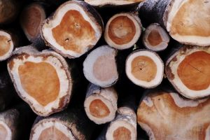 Smuggled timber seized in raid led by Manipur minister