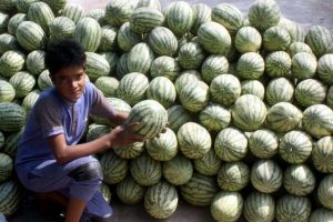Singapore importers show interest in Bankura's watermelons