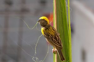 In pics: Birds of different feathers in Raipur